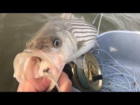 Flats Fly Fishing For Spunky Stripers