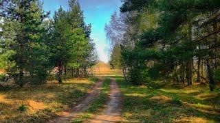 Путешествия и поездки в леса и по улицам Смоленска.