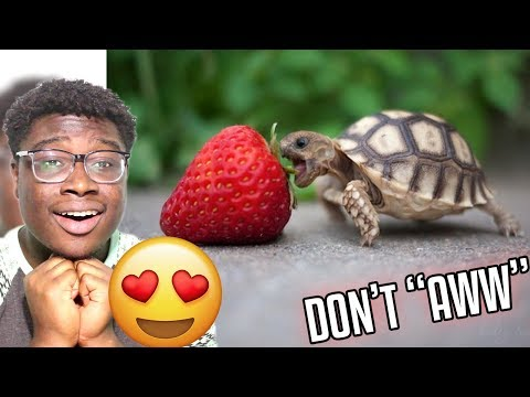 TRY NOT TO AWWW CHALLENGE!!! (95% FAIL RATE)
