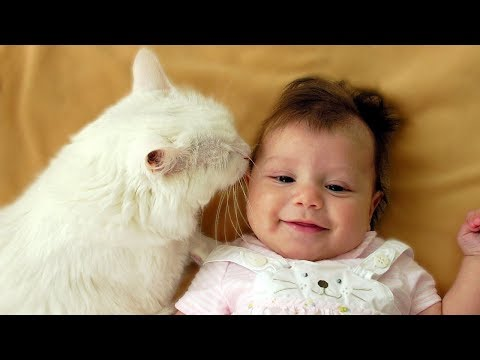 Cats and Babies Playing Together Compilation NEW