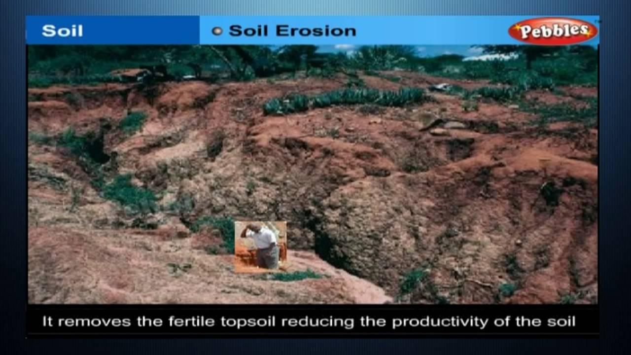 Soil class 7th cbse biology ncert cbse syllabus for Soil 7th class