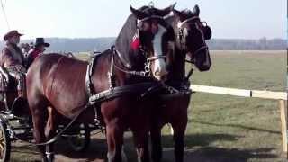 Darz Bór - HUBERTUS - SPAŁA 2012 - Beautiful horses - Красивые лошади