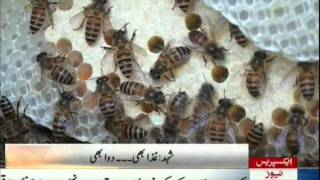 USAID helping bee farmers in Swat valle pakistan sherin zada express news swat.mpg