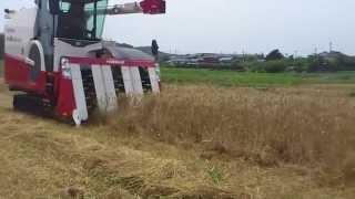 YANMAR AG6114Rにて小麦収穫 小麦ワラ・・・長わらにて排出(この後ロールベ...