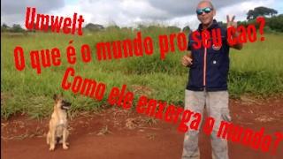 Ensinando seu Cão,Como seus Cães vêem o Mundo,UMWELT,Comportamento dos cães