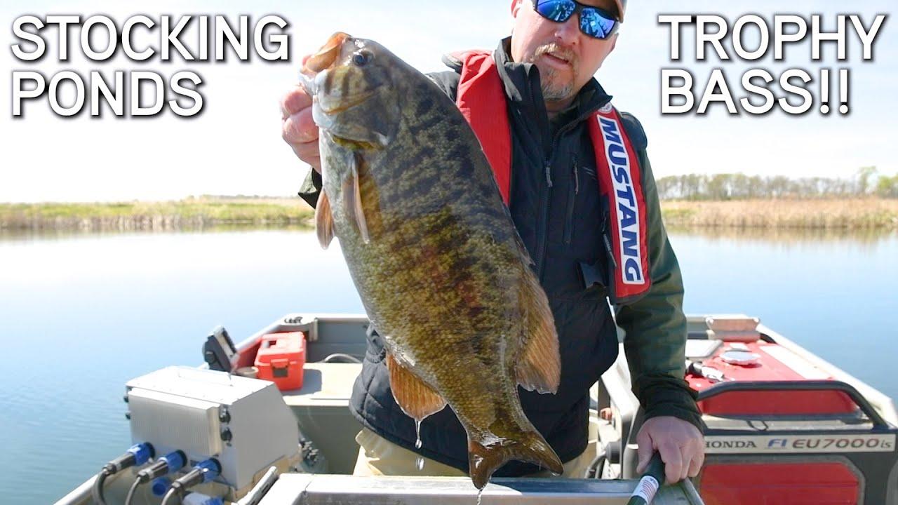 How To Stock Your Pond For Trophy Fishing!!