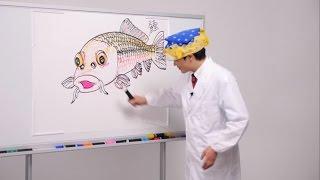 さかなクンが自らのイラストとともに解説する「さかなクンのお魚図鑑」...
