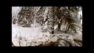 LOOK ! hunting for moose in the winter! смотреть! охота на лося зимой!