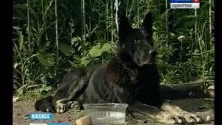 Собака в Ижевске не пускает клиентов на почту