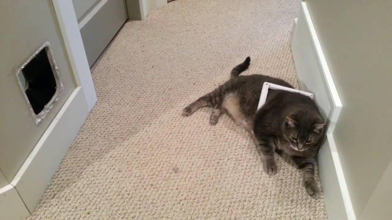 Полный котик застрял
