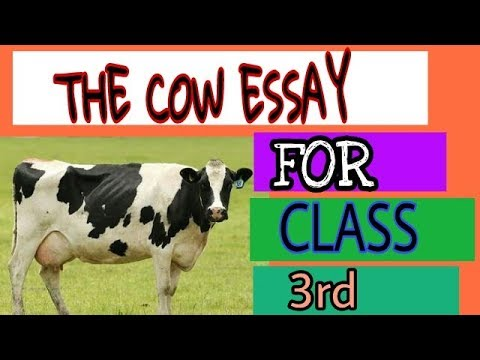 Help Writing Essay Paper  Thesis For Compare And Contrast Essay also General Essay Topics In English The Cow Essay For Class Rd Essay On Health Care Reform