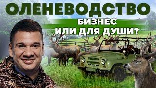 Оленеводство как Бизнес Российский сафари-парк в Калининграде Андрей Даниленко