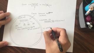 RNA Interference (RNAi): Basic Mechanism (Graduate Level)
