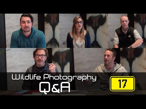 Wildlife Photography Q&A: Episode 17