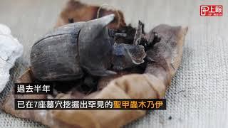 埃及新發現 《神鬼傳奇》聖甲蟲、貓咪木乃伊出土