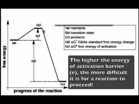 The Reaction Coordinate Diagram Youtube