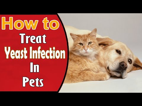how-to-treat-yeast-infection-in-pets-||-home-remedies-for-yeast-infection-in-pets
