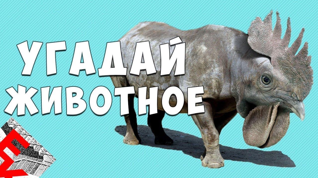 угадай животное по картинке мем использованием можно будет