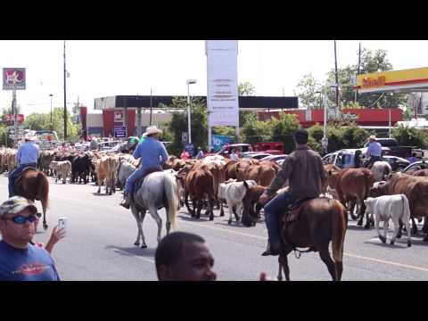 Cattle Drive of 2015 - Dayton, TX
