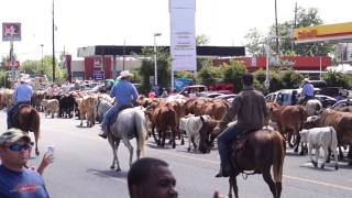 Cattle Drive of 2015 - Dayton, TX