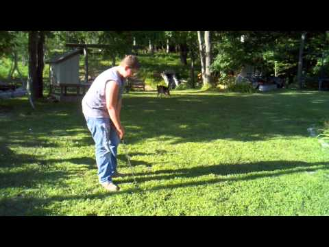 Worlds best golf dog Jerry Lee pitching/chipping practice German Shepherd