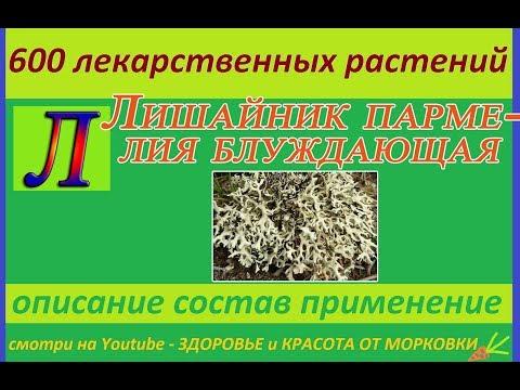 ЛИШАЙНИК ПАРМЕЛИЯ БЛУЖДАЮЩАЯ 600 лекарственных растений