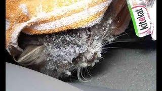 道路で雪に覆われていた子猫。車がどんどん素通りしていく中、一人の男性が・・・。