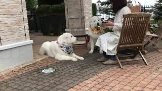 今日は蒸し暑かったでしゅ〜。 ママがベーグル&ベーグルのベーグルが食...