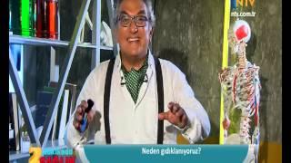 NTV İzle, 2 dakikada sağlık: Neden Gıdıklanırız?)