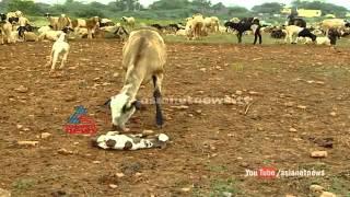 Popular Andhra Pradesh & Village videos