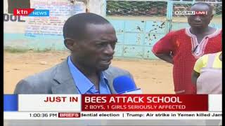 Bees attack school : Bees sting a number of pupils in Kisumu