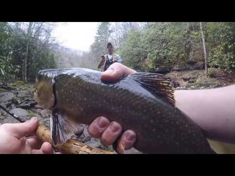 FLY FISHING FOR BIG TROUT IN WEST VIRGINIA!!!