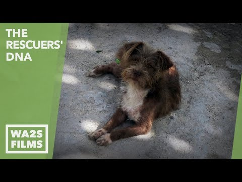 Thumbnail: We Cried When We Saw All The Sick Homeless Dogs In This Famous Resort Town: Ep 7 The Rescuers DNA