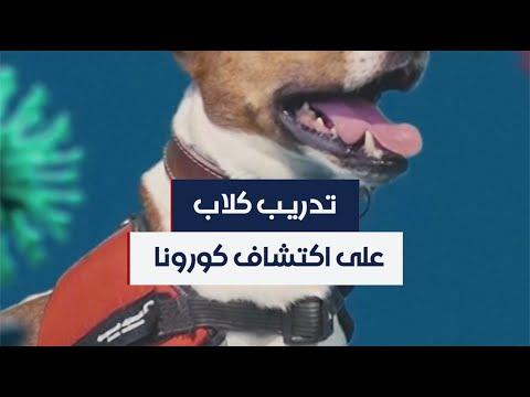 السعودية.. تدريب كلاب على اكتشاف المصابين بفيروس كورونا  - 21:57-2020 / 8 / 10