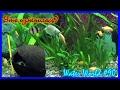 Water World #90 / Большой аквариум. Есть результат?