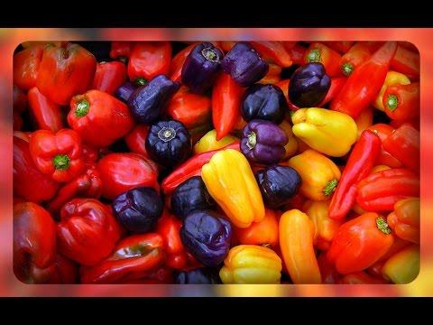 Болгарский перец.  Сорта и гибриды