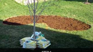 Create Flowerbed and Plant Flowers in Butterfly Garden