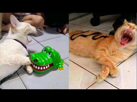 Try Not To Laugh or Grin While Watching Funny Animals Compilation Woa Kitty