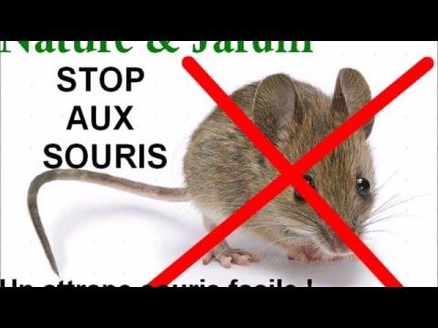 Capturer Une Souris capturer une souris! un piège facile et efficace! - youtube