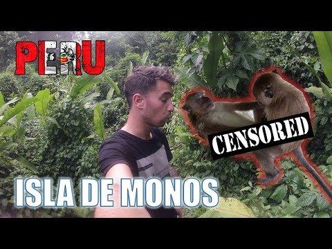 Así es ISLA DE MONOS en el AMAZONAS | PERÚ