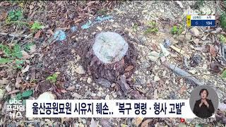 울산공원묘원 시유지 훼손  복구 명령·형사 고발 202…