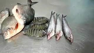 Fish names in English & Tamil | 50 varieties | By Supreme Seafood