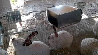 Кормушки для кроликов \ обзор