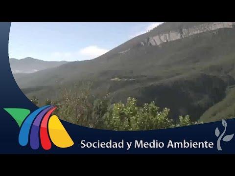 Pumas y osos detectados en la Sierra de Zapalinamé | Noticias de Coahuila