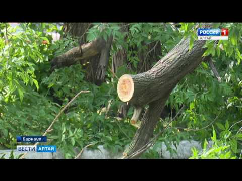 Без электричества из-за грозы в Алтайском крае оставались 12 тысяч человек