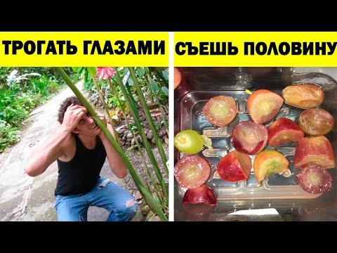 Люди, понимающие всё слишком буквально! (часть 2) - Видео онлайн