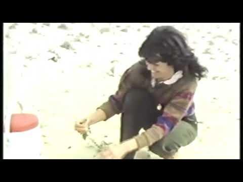 1984   Kuwait's Natural Flora