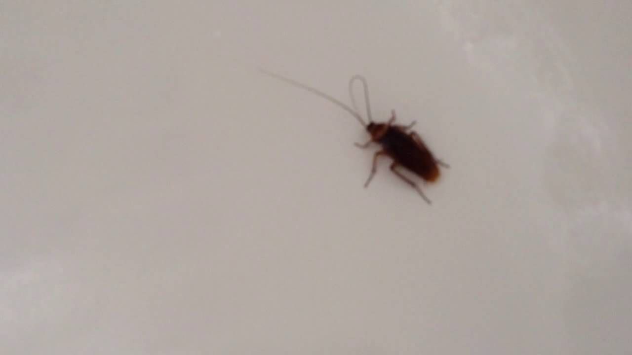 Roaches in bathroom