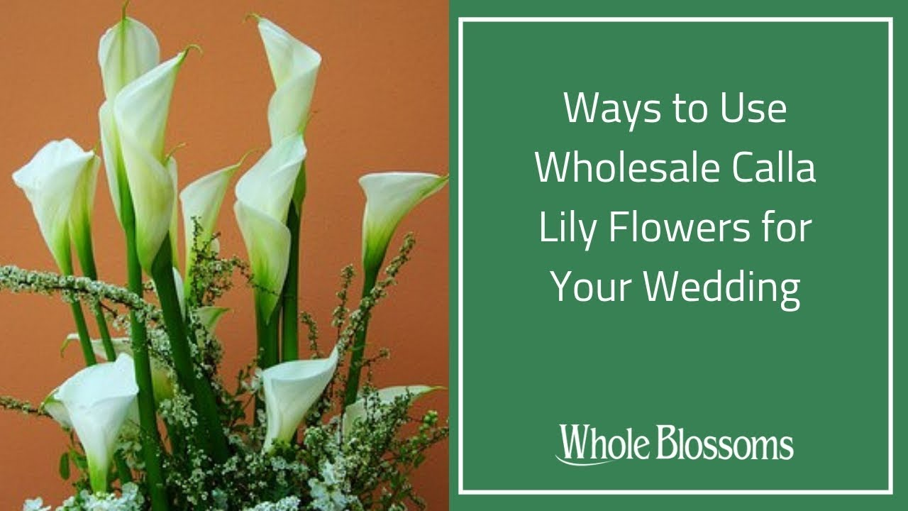 Best ways to use wholesale calla lily flowers in your wedding youtube wholesaleflowers callalilies callalilyflower izmirmasajfo