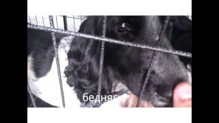 Продажа собак в Баку